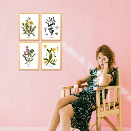 Set 4 tablouri Plante Medicinale, Papadie, Menta, Salvia, Arnica6