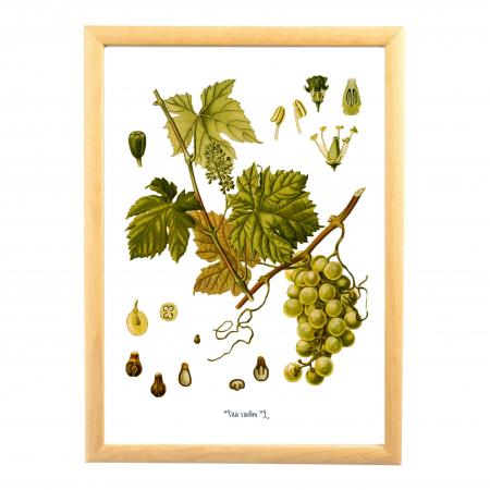 Set 6 Tablouri Fructe, 21x30cm, Portocala, Strugure, Cires, Mar, Gutuie, Nuca,4