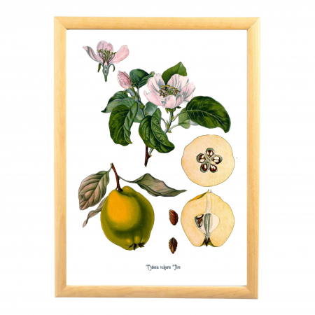 Set 6 Tablouri Fructe, 21x30cm, Portocala, Strugure, Cires, Mar, Gutuie, Nuca,1