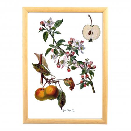 Set 6 Tablouri Fructe, 21x30cm, Portocala, Strugure, Cires, Mar, Gutuie, Nuca,3