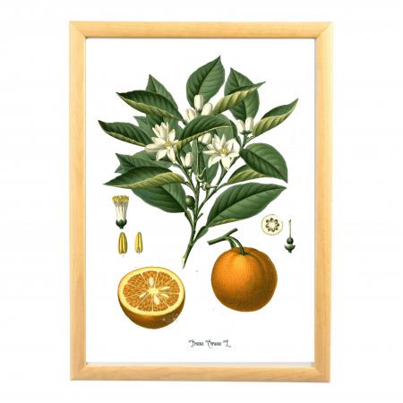 Set 6 Tablouri Fructe, 21x30cm, Portocala, Strugure, Cires, Mar, Gutuie, Nuca,6