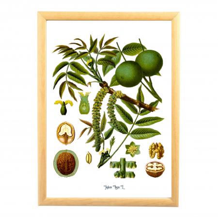Set 6 Tablouri Fructe, 21x30cm, Portocala, Strugure, Cires, Mar, Gutuie, Nuca,2