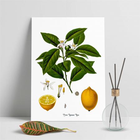 Lamaie, desen botanic clasic, ilustratie vintage [6]