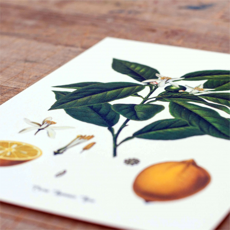 Tablou Lamaie, 21x30cm, desen botanic clasic2