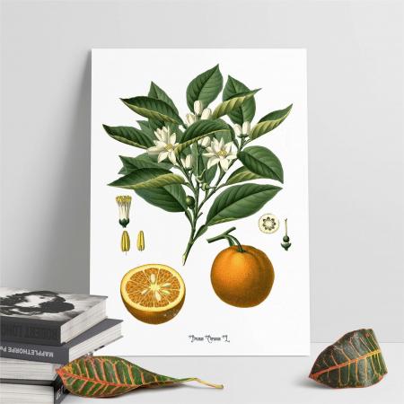 Tabou Portocala, 21x30cm, desen botanic clasic5