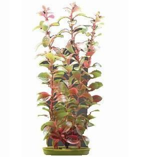 Planta artificiala Marina Red Ludwigia 20 cm 0