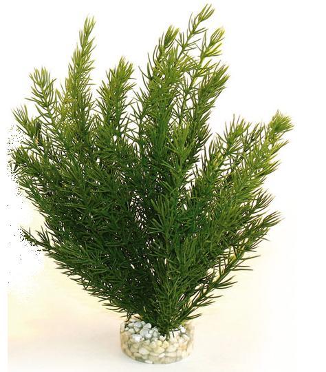 Planta Sydeco Club Moss 30 cm 0