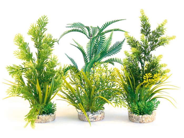 Planta Sydeco Fern 36 cm 0