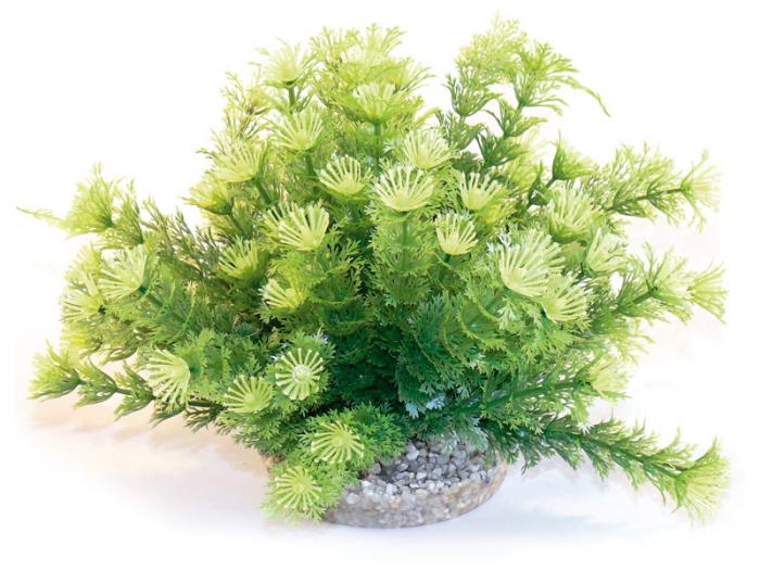 Planta Sydeco Marina Bowl 21 cm 0