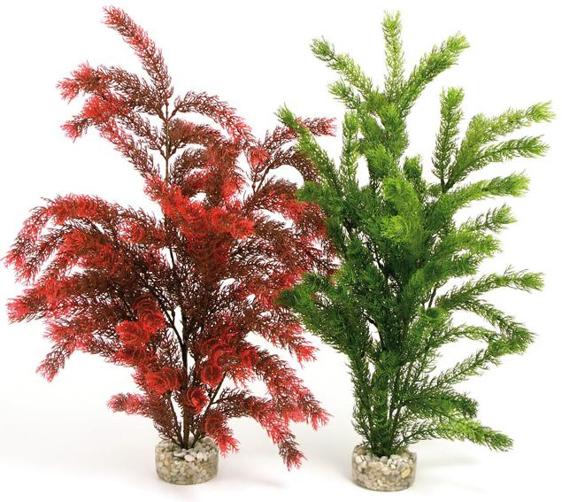 Planta Sydeco Sea Pearl 45 cm 0