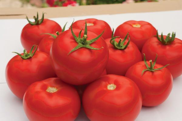 Seminte de tomate semideterminate Gravitet F1, 500 sem [4]