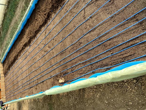 Aparat pentru incalzirea substraturilor si a rasadnitelor 3 kW [2]