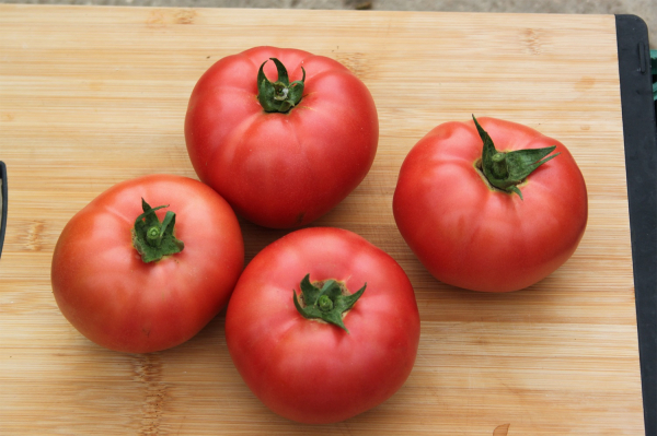 Seminte de tomate nedeterminate, tip beef, Manekro F1, 500 sem [0]
