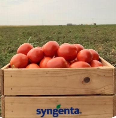 Seminte de tomate determinate Brixtone F1, 2500 sem [0]