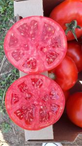 Seminte de tomate semideterminate Gravitet F1, 500 sem [5]