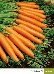 Seminte de morcov Yukon F1, 100.000 seminte [1]
