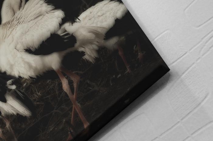 Tablou Canvas Artantida - Stork [1]