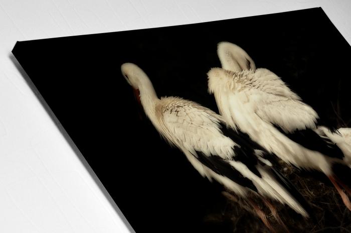 Tablou Canvas Artantida - Stork [3]