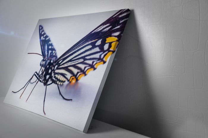 Tablou Canvas -Butterfly [2]