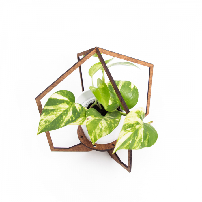 Masca_Ghiveci_Alba_cu_Suport_Lemn_Hexagon_decorativa [1]