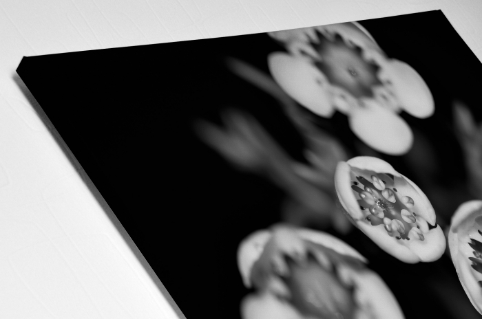 Tablou Canvas - Black and White Flower [3]