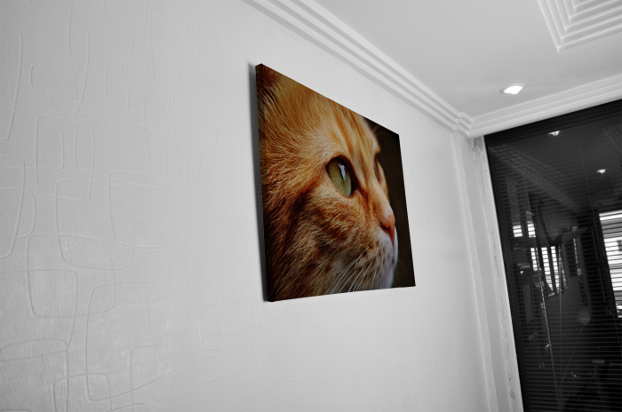 Tablou Canvas - Cat Face [4]