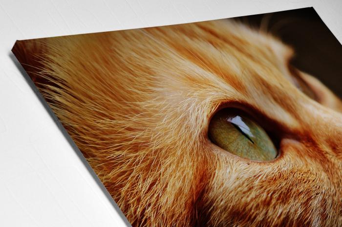 Tablou Canvas - Cat Face [1]