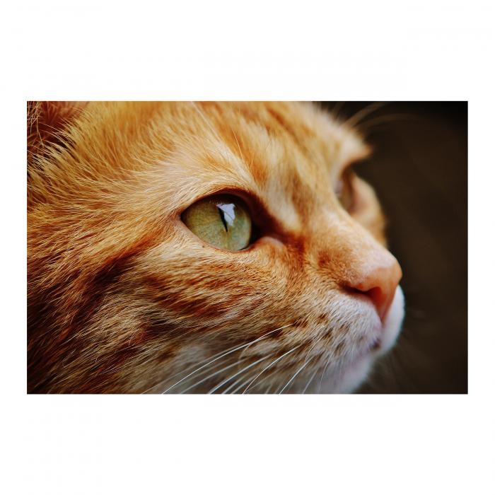 Tablou Canvas - Cat Face [0]