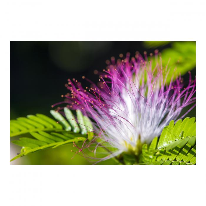 Tablou Canvas - Exotic Flower [0]