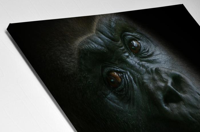 Tablou Canvas - Gorilla [3]