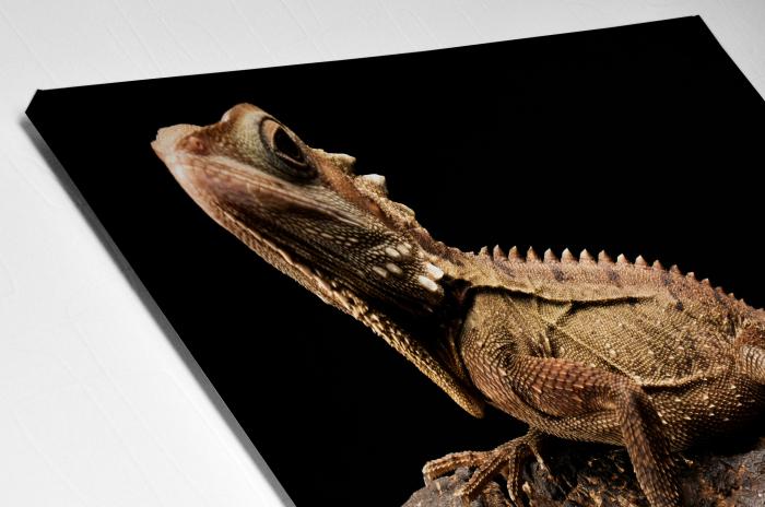 Tablou Canvas - Iguana [3]