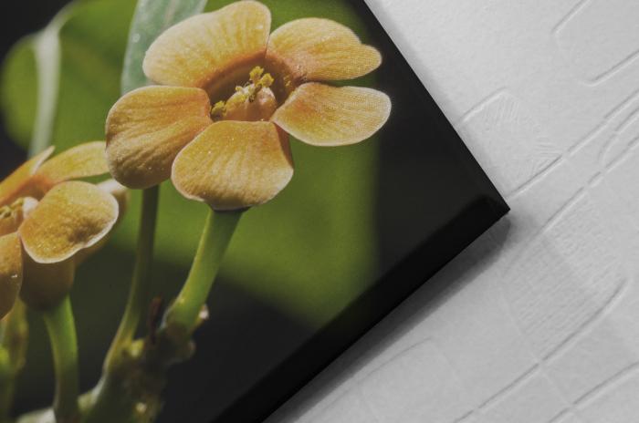 Tablou Canvas - Orchid Flower [1]