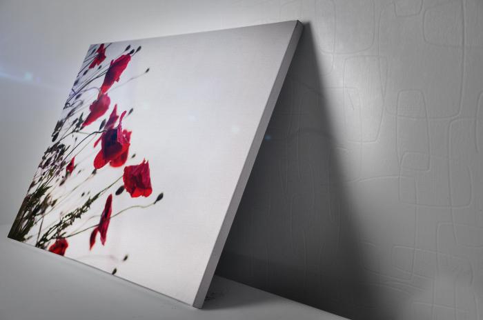 Tablou Canvas - Poppies [2]