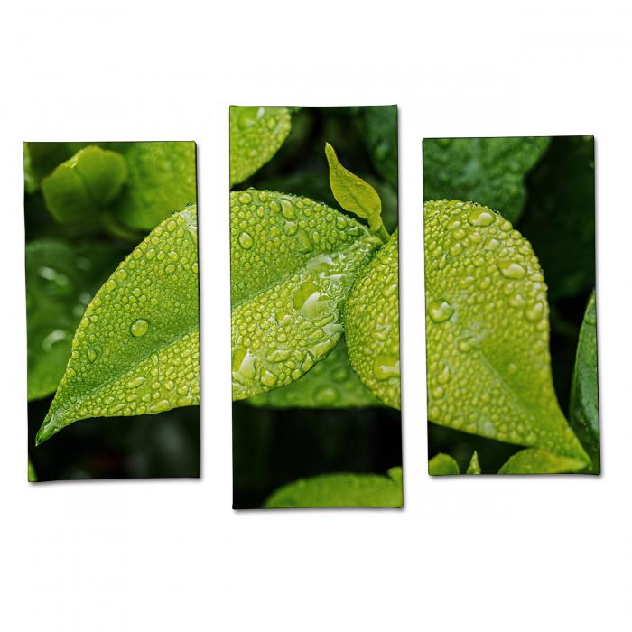 Tablou Multi-Canvas Green Leaves [0]