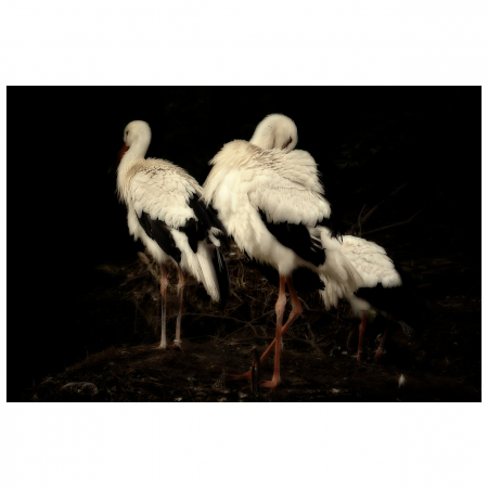 Tablou Canvas Artantida - Stork [0]
