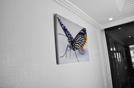 Tablou Canvas -Butterfly [4]
