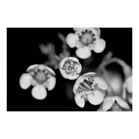 Tablou Canvas - Black and White Flower [0]