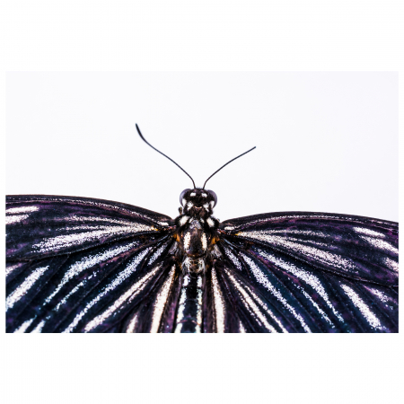 Tablou Canvas - Butterfly [0]