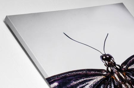 Tablou Canvas - Butterfly [3]