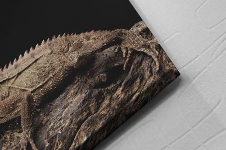 Tablou Canvas - Iguana [1]