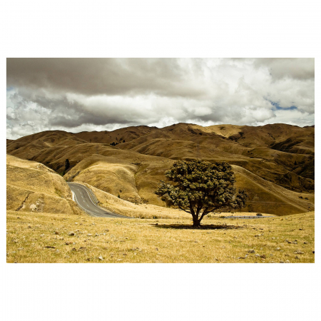 Tablou Canvas - One Tree [0]