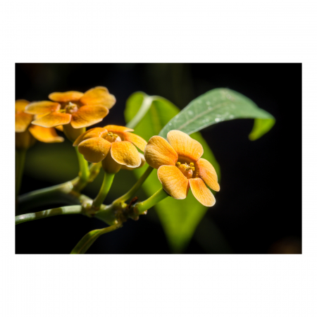 Tablou Canvas - Orchid Flower [0]