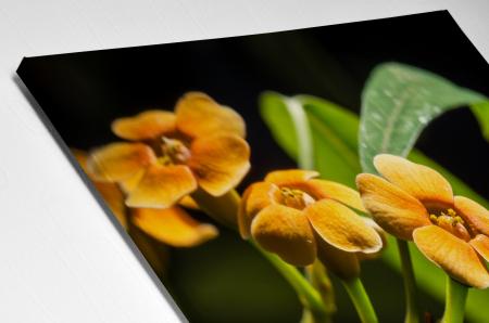 Tablou Canvas - Orchid Flower [3]