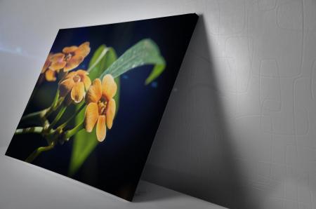 Tablou Canvas - Orchid Flower [2]