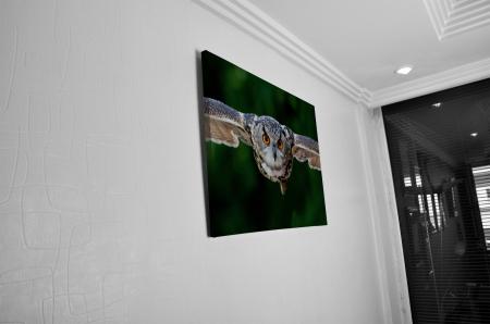 Tablou Canvas - Bufnita [4]