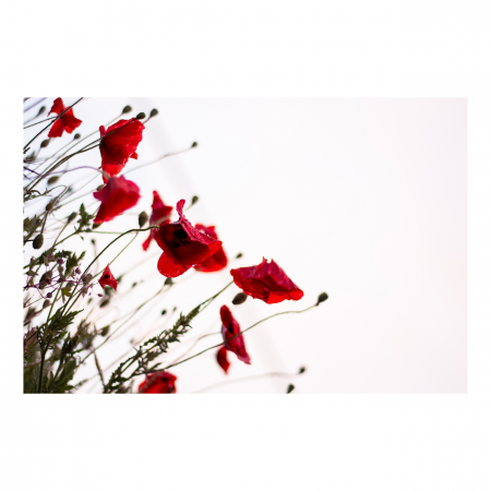 Tablou Canvas - Poppies [0]
