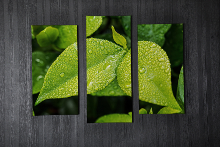 Tablou Multi-Canvas Green Leaves [1]