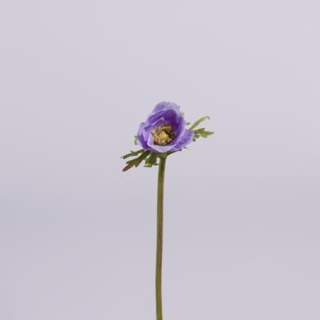 Anemona medie lila