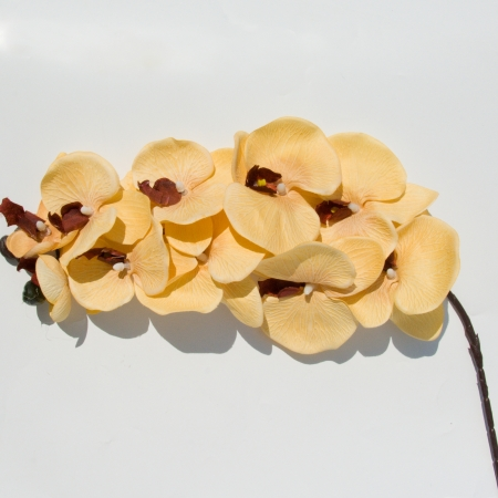 ORHIDEE PHALAENOPSIS 10 CUPE CAPPUCCINO 95 CM0
