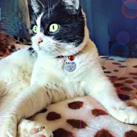 Medalion personalizat cu nume pentru pisicuta, id tag rotund pentru animale de companie, gravat pe banut din aluminiu [1]